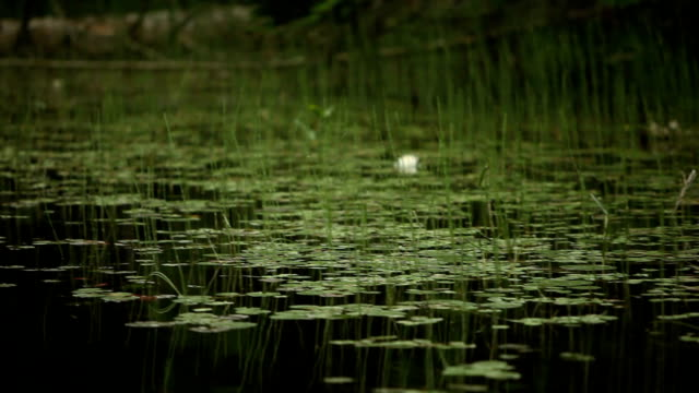 Floating by Thin Reeds in Woodland Stream video