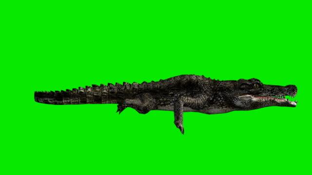 Floating Crocodile Green Screen (Loopable) video