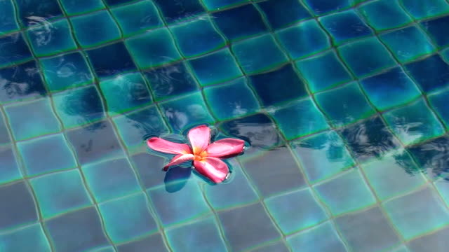 Floating Flower video