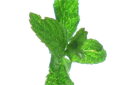 Floating mint twig video
