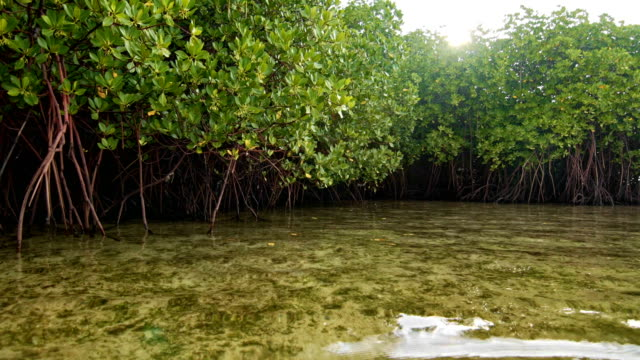 Floating near mangroves shore video