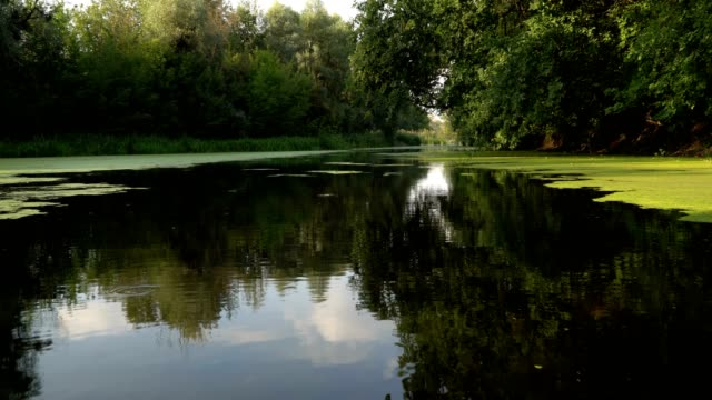 Floating on river Floating on boat calm on river at sunny morning duckweed stock videos & royalty-free footage