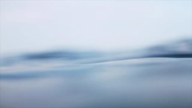 Floating on the surface of water macro video