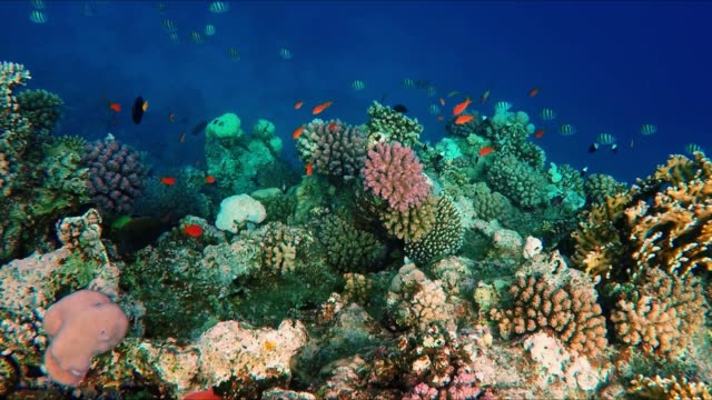 Floating over a lively coral reef with a lot of fish Floating over a colorful coral reef teeming with a great diversity of fish. reef stock videos & royalty-free footage