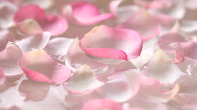 floating petals video