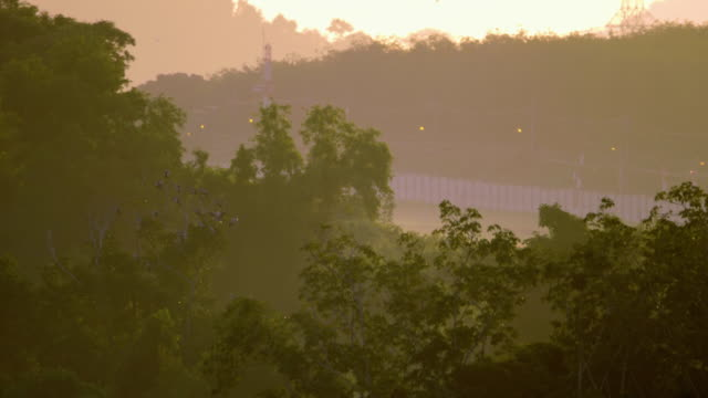 木の上のアジアのオープンビルの鳥の群れ ビデオ