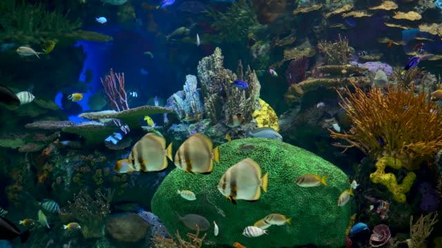 Flock of beautiful tropical fish underwater An underwater tropical fish of different species. Coral reef. Handmaid sea life stock videos & royalty-free footage