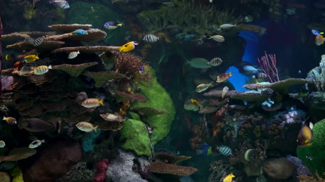 Flock of beautiful tropical fish underwater