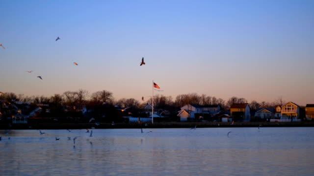 Flock of Birds 03 video