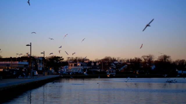 Flock of Birds 05 video