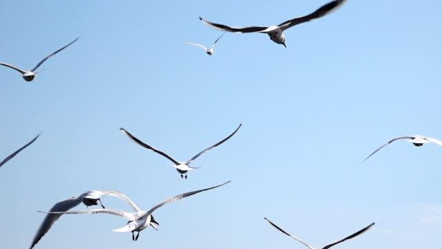 一群鳥與天空對著幹。 - 海鷗 個影片檔及 b 捲影像