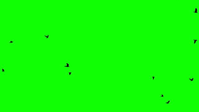 A flock of birds flies