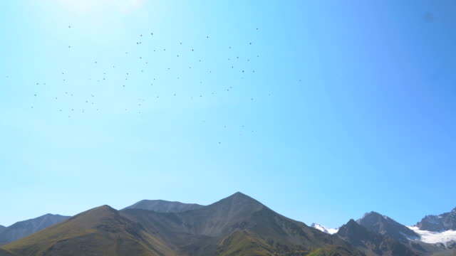 A flock of birds flying against the snowhead mountains and picturesque valley in Caucasus mountains video