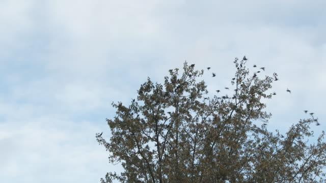 木から飛ぶ鳥の群れ - 鳥点の映像素材/bロール