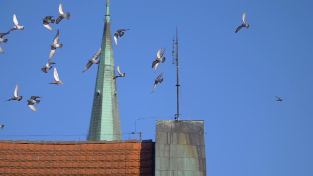 Flock of birds flying in the city in slow motion 180fps