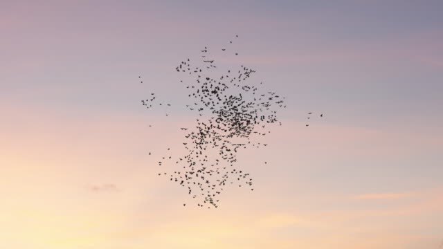 vídeos de stock, filmes e b-roll de bando de pássaros voando no céu - pássaro