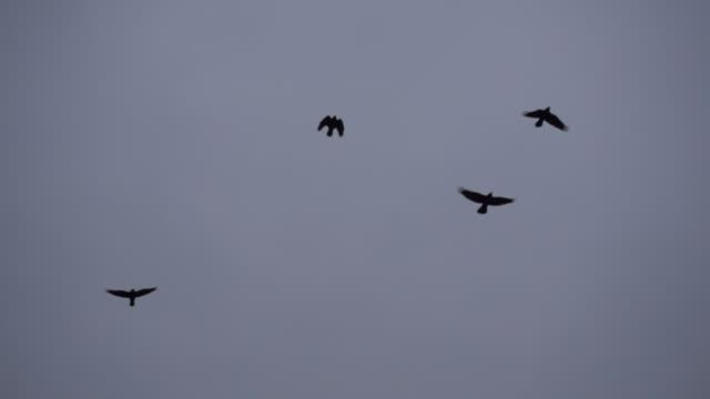スローモーションのビデオを飛んでいる鳥の群れ - ローアングル点の映像素材/bロール