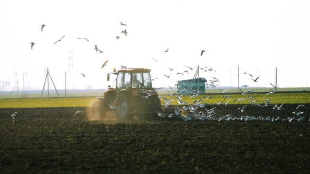 かもめの鳥の群れは、春のフィールドを耕すトラクターの後ろに飛ぶ。農業のシーズンの始まり - 水鳥点の映像素材/bロール