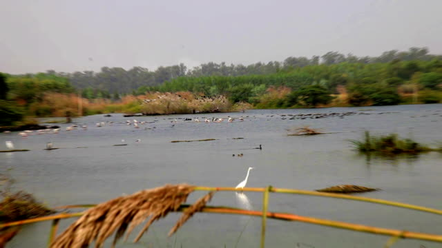 Flock of birds sitting in the lake located in rural India.