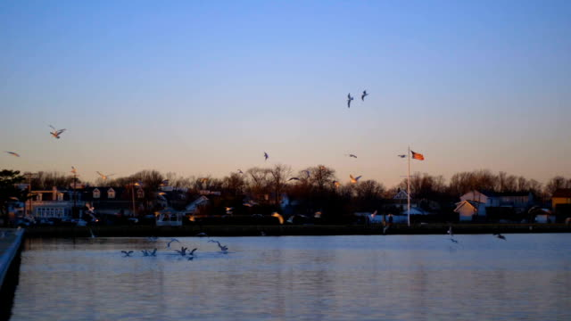 Flock of Birds video