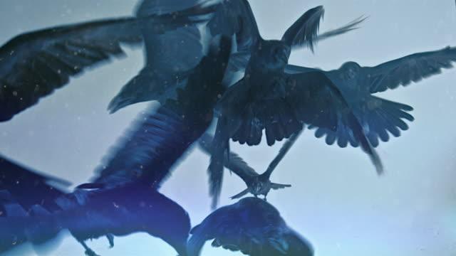一群黑烏鴉。暴風雪。 - 鳥 個影片檔及 b 捲影像