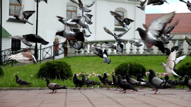 Flock of doves flying near an Orthodox church. Belarus Minsk video