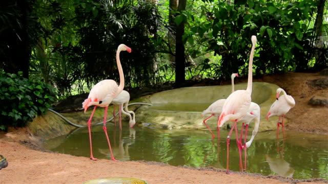 flock of flamingo - großwild stock-videos und b-roll-filmmaterial