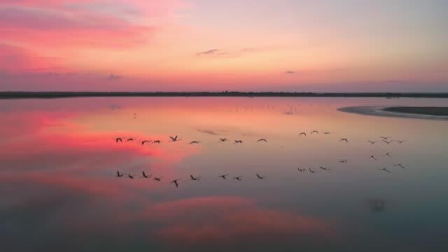 AERIAL Flock of flamingos flying at dusk