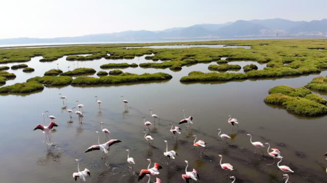 Flock of Flamingos Flock of Flamingos group of animals stock videos & royalty-free footage