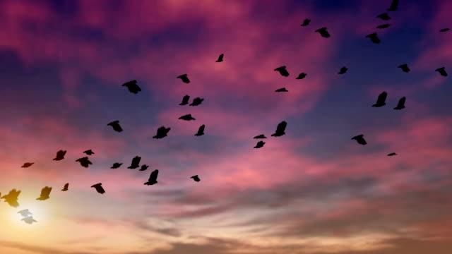 stormo di piccioni al crepuscolo loop - colomba video stock e b–roll