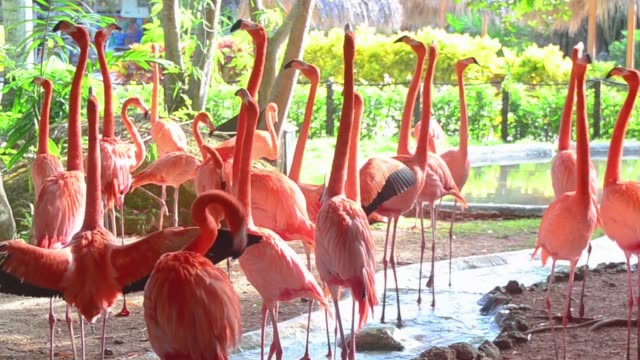 Flock of pink flamingos at the zoo