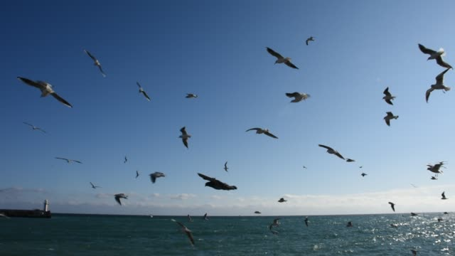 Flock of sea gulls over the sea A flock of sea gulls randomly pouring over the sea on a sunny day water bird stock videos & royalty-free footage