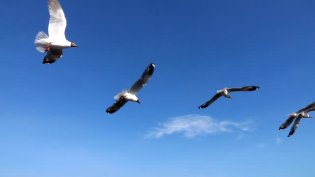 Flock of Seagull flying over seascape,Slow motion Flock of Seagull flying over seascape,Slow motion seagull stock videos & royalty-free footage