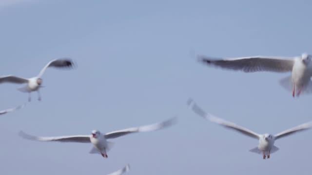 シースケープ、スローモーション上空を飛ぶカモメの群れ - 鳥点の映像素材/bロール