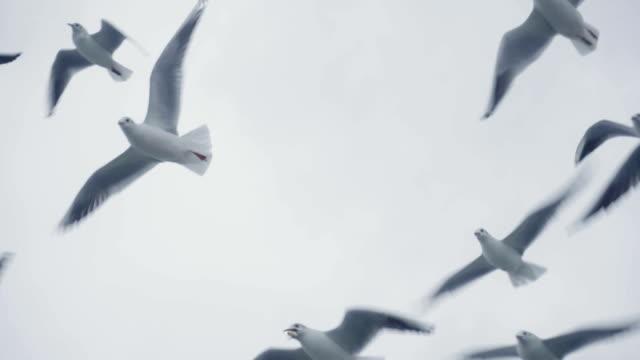 herde von möwen und vögel fliegen hoch in den himmel. slow-motion - horizont über wasser stock-videos und b-roll-filmmaterial