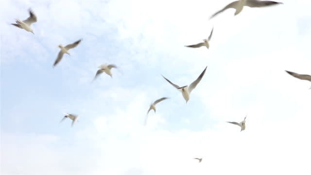 Flock of seagulls flying in the sky on a clear day, slow motion, view from below Flock of seagulls flying in the sky on a clear day, slow motion, view from below seagull stock videos & royalty-free footage