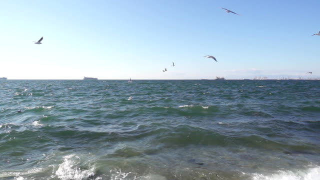 A flock of seagulls hovers over the seashore slow mo video