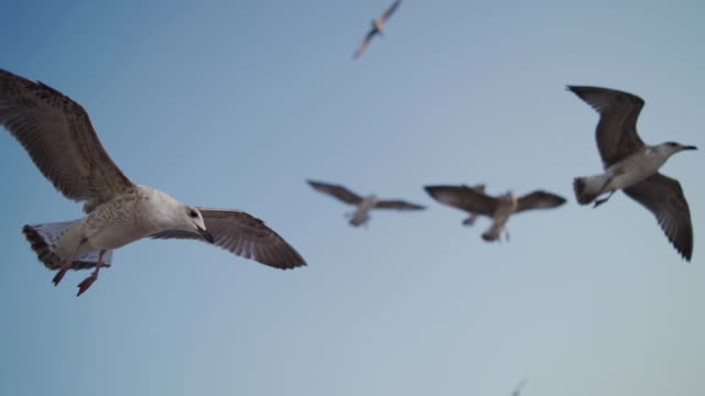 Flock of seagulls Seagulls hovering stock videos & royalty-free footage