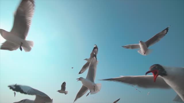 vídeos y material grabado en eventos de stock de slo mo una bandada de gaviotas - pájaro