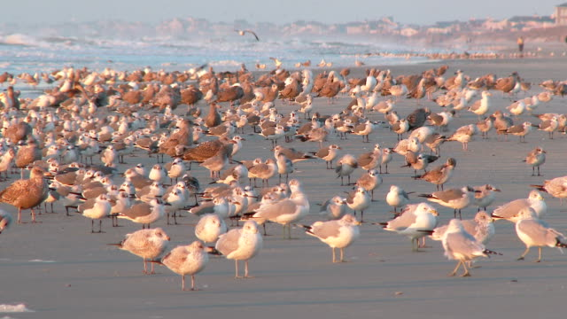 Flock of Seagulls video