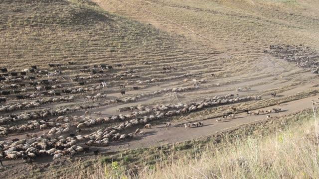羊の群れ - アナトリア点の映像素材/bロール
