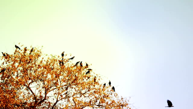 Flocks of Birds Sitting on the Tree video