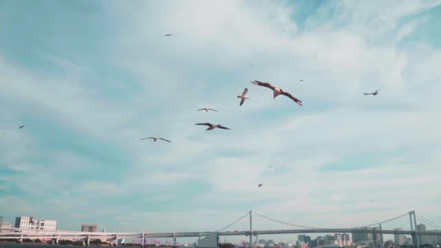 Flocks of birds Flocks of birds seagull stock videos & royalty-free footage