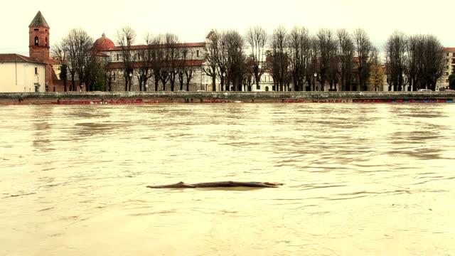 hd: inondazione del fiume arno di pisa - pisa video stock e b–roll