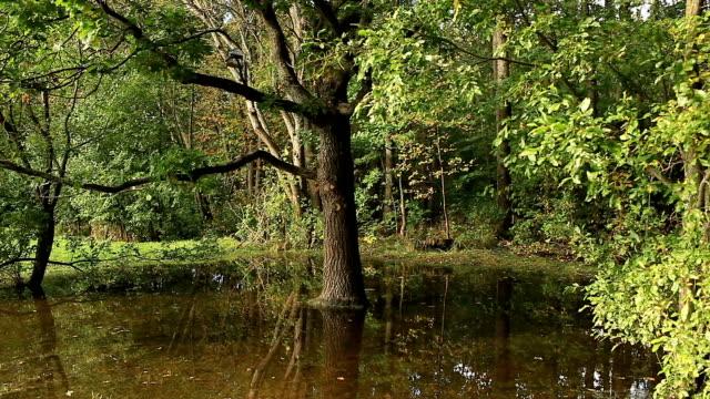 flooded forest - дубовый лес стоковые видео и кадры b-roll