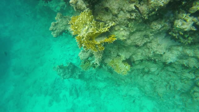 Flora and fauna of coral reefs video