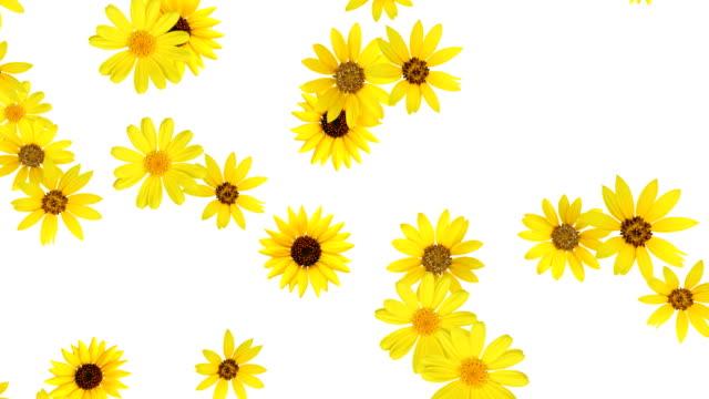 цветочный фон (желтый)-alpha, seamless looping - sunflower стоковые видео и кадры b-roll