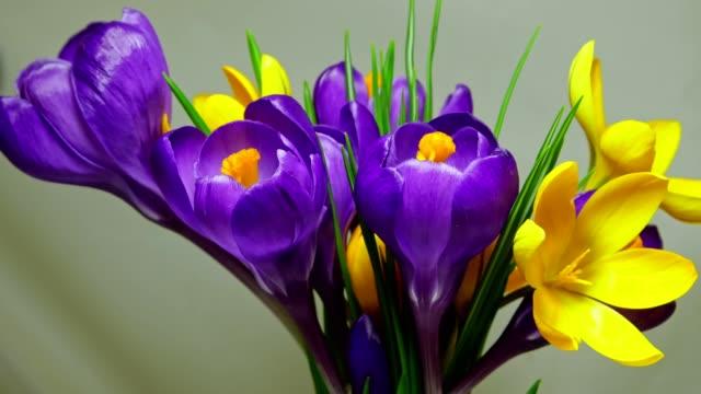 vidéos et rushes de pied floral pour une carte de voeux avec un bouquet fleuri de crocus - crocus
