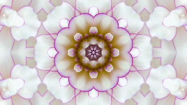 stockvideo's en b-roll-footage met bloemenmandala op witte achtergrond met exemplaarruimte - mandala