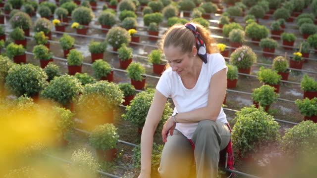 Florist potting flowers in flower farm